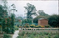 0002259_FourCorners_Photograph_WilfThust_HarryThorpe_ResearchOnAllotmentsInBirminghamSetupByProfessorThorpe_1975_Photo63.jpg
