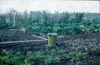 0002253_FourCorners_Photograph_WilfThust_HarryThorpe_ResearchOnAllotmentsInBirminghamSetupByProfessorThorpe_1975_Photo57.jpg