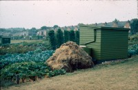 0002252_FourCorners_Photograph_WilfThust_HarryThorpe_ResearchOnAllotmentsInBirminghamSetupByProfessorThorpe_1975_Photo56.jpg