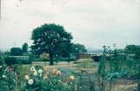 0002201_FourCorners_Photograph_WilfThust_HarryThorpe_ResearchOnAllotmentsInBirminghamSetupByProfessorThorpe_1975_Photo05.jpg