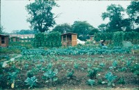 0002207_FourCorners_Photograph_WilfThust_HarryThorpe_ResearchOnAllotmentsInBirminghamSetupByProfessorThorpe_1975_Photo11.jpg