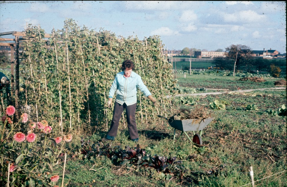 0002261_FourCorners_Photograph_WilfThust_HarryThorpe_ResearchOnAllotmentsInBirminghamSetupByProfessorThorpe_1975_Photo65.jpg